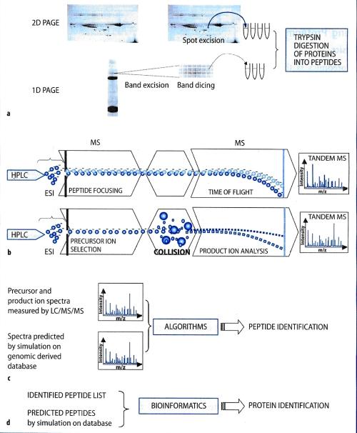 tehnica-proteomics